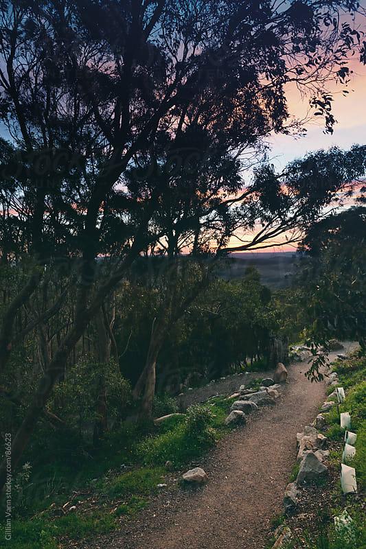 good morning from Mt Lofty, Adelaide Hills by Gillian Vann for Stocksy United