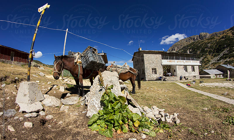Loaded horses in front mountain home by Marko Milovanović for Stocksy United