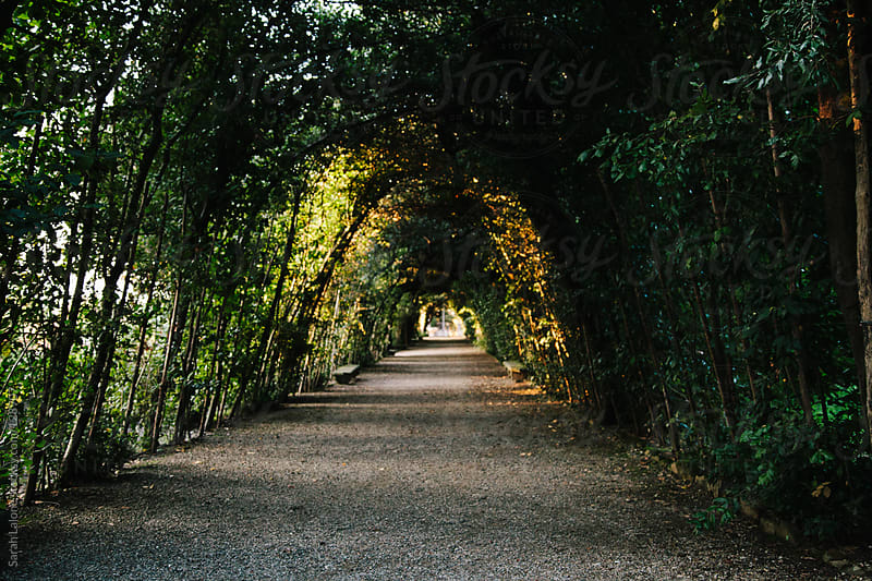 vine-covered archway tunnel by Sarah Lalone for Stocksy United