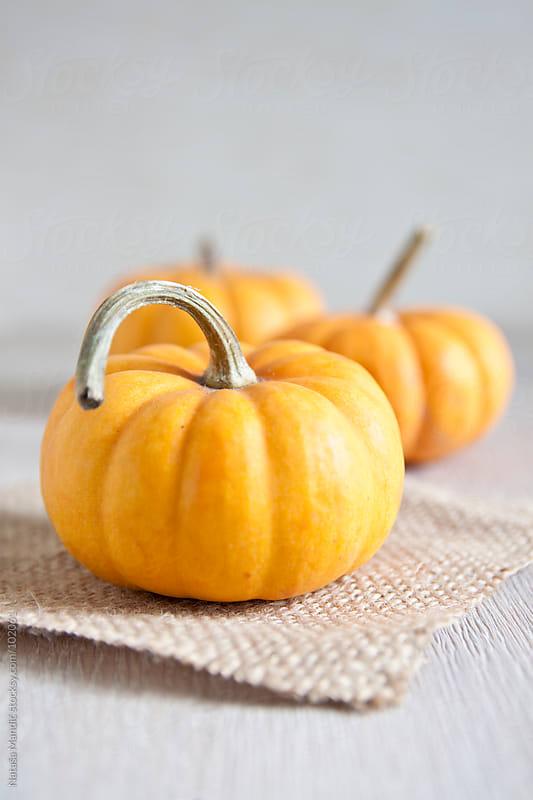 Small Pumpkins on a table by Nataša Mandić for Stocksy United