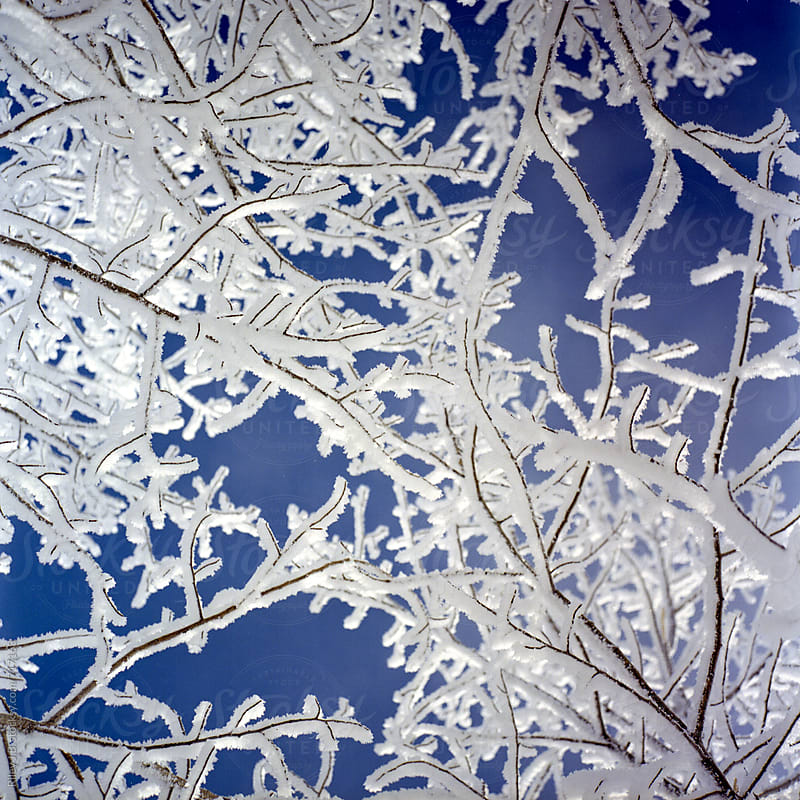 Tree branches covered in hoar frost with blue skies by Riley Joseph for Stocksy United