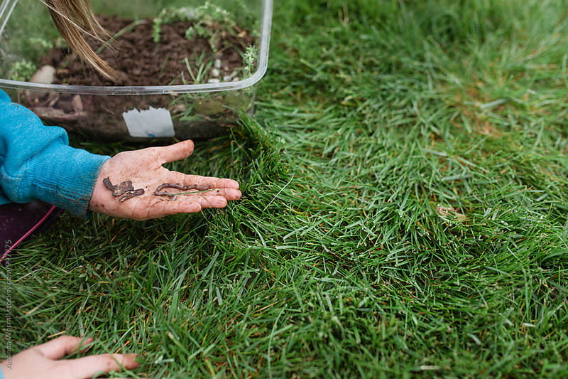 Close up of a child digging in the dirt for worms by Amanda Worrall for Stocksy United