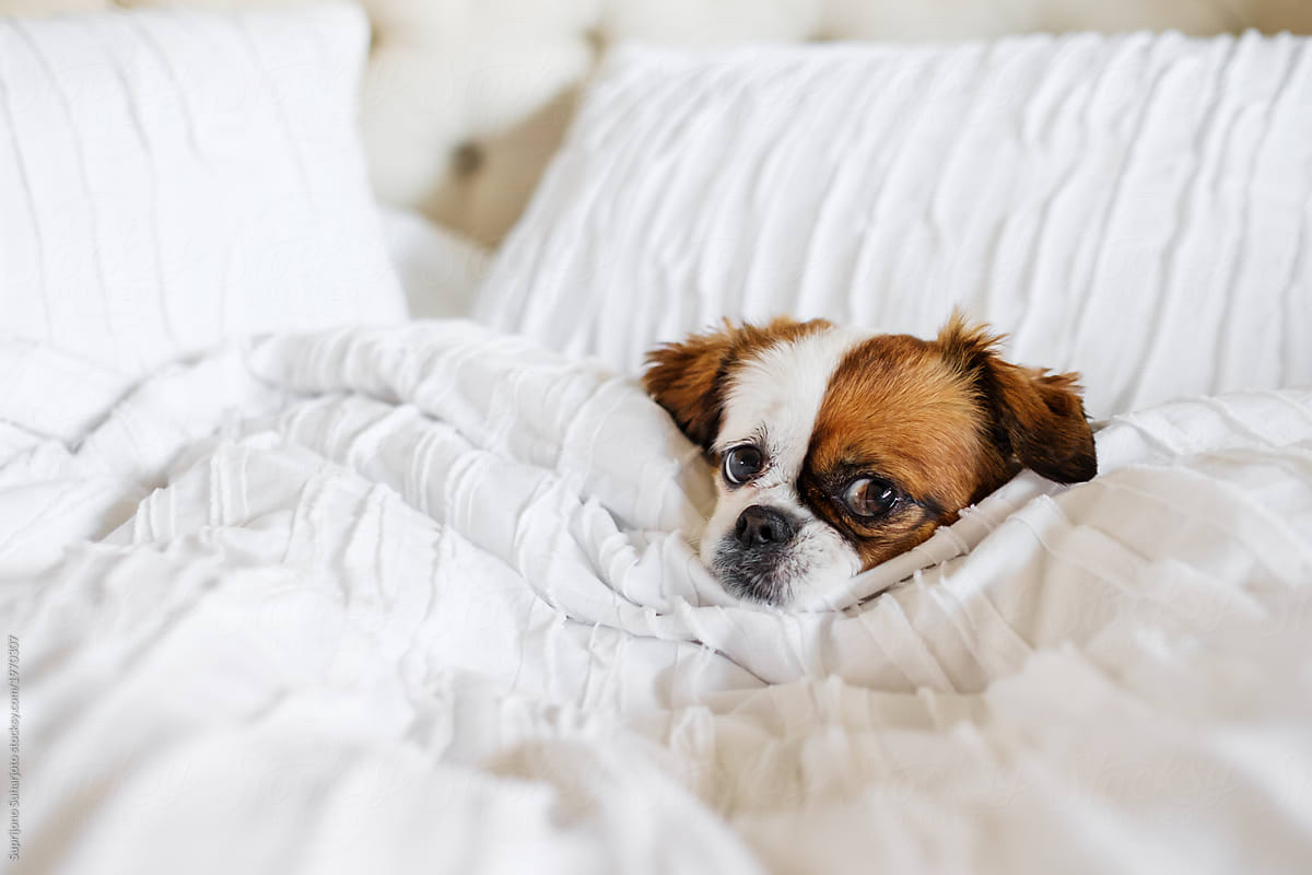 Cute Dog Sleeping On The Bed By Take A Pix Media Dog Pet