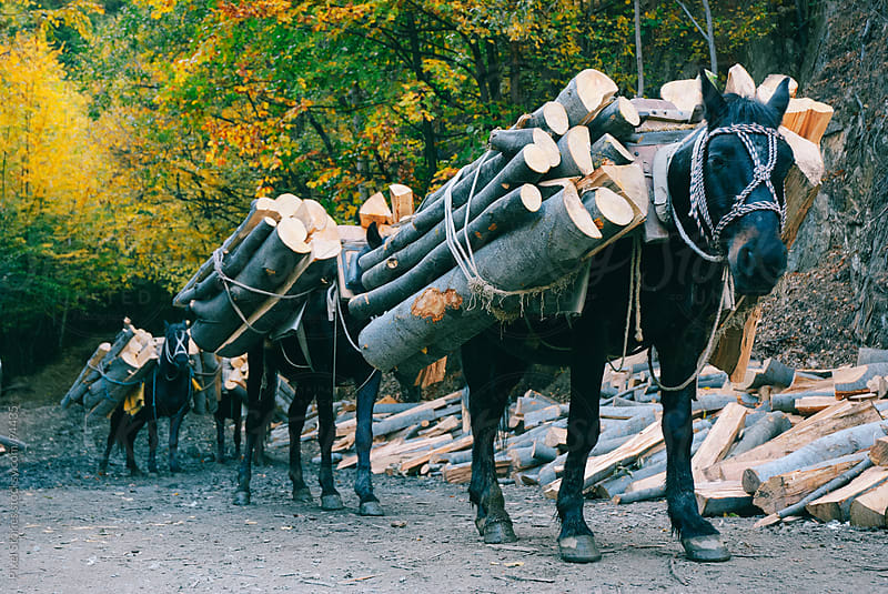 Horses transporting wood by Pixel Stories for Stocksy United