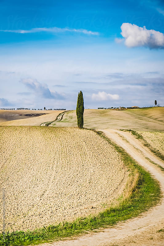 Country Road in the Fields of the Val d'Orcia, Tuscany by Giorgio Magini for Stocksy United