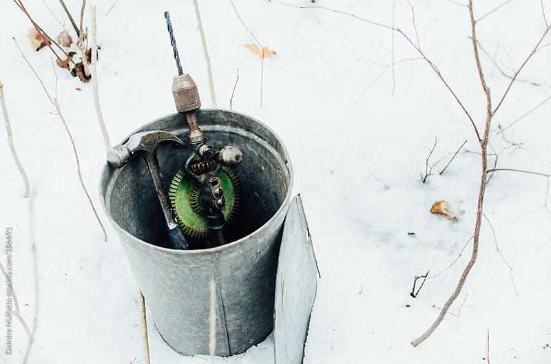 bucket and drill for tapping maple trees by Deirdre Malfatto for Stocksy United