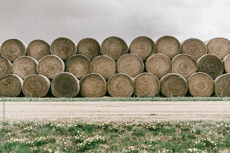 Hay Bales in Rural South Dakota by Raymond Forbes LLC for Stocksy United