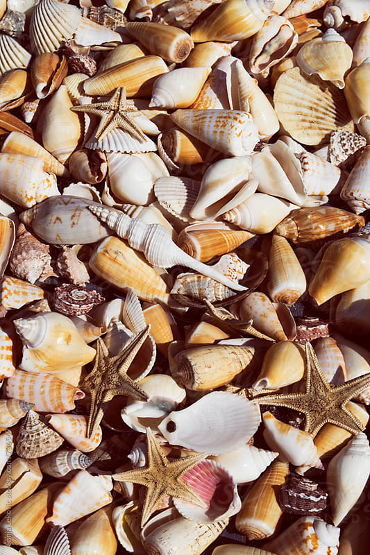 various seashells background by Sonja Lekovic for Stocksy United
