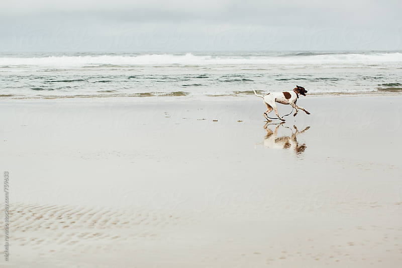 Dog running on the shore by michela ravasio for Stocksy United