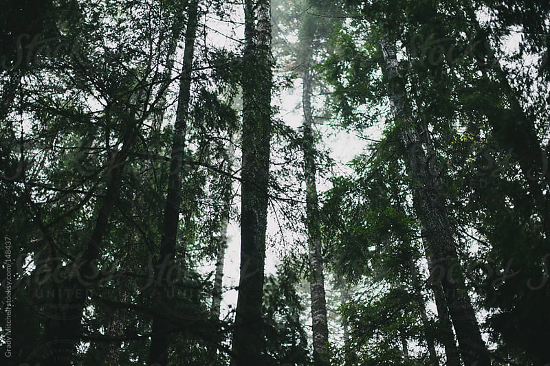 Trees in Fog by Grady Mitchell for Stocksy United