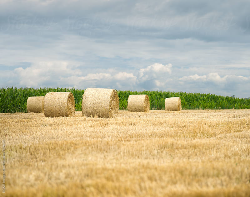 Hay bales on a golden field and cloudy sky by RG&B Images for Stocksy United