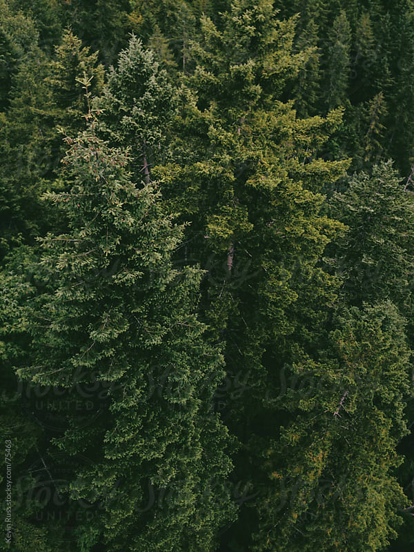 Dense Forest by Kevin Russ for Stocksy United