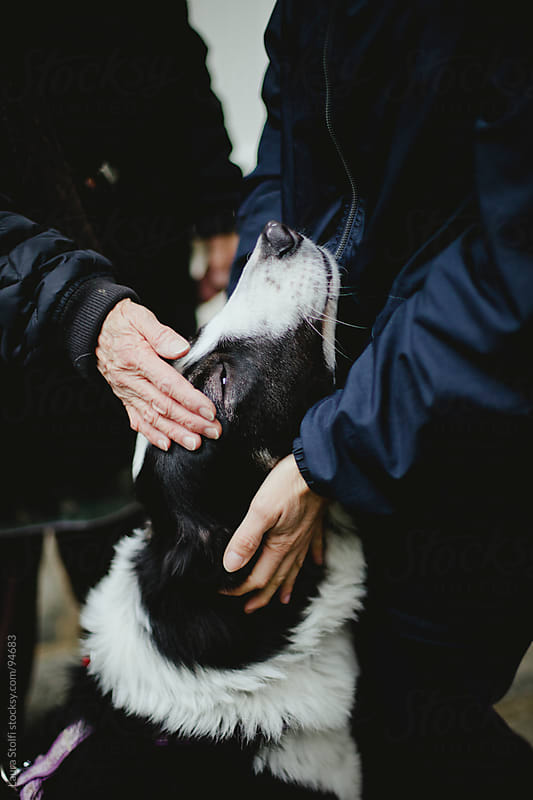 Detail of two women's hands stroking and cuddling a beautiful shepherd dog who sits between them  by Laura Stolfi for Stocksy United