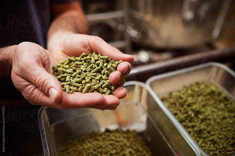 Beer: Holding a Handful Of Hops Pellets for Beer Process by Sean Locke for Stocksy United