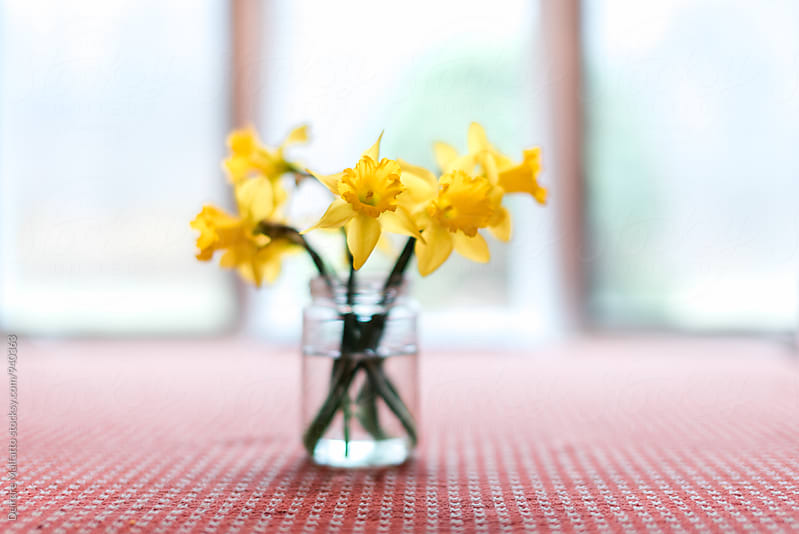 daffodils in a jar by Deirdre Malfatto for Stocksy United
