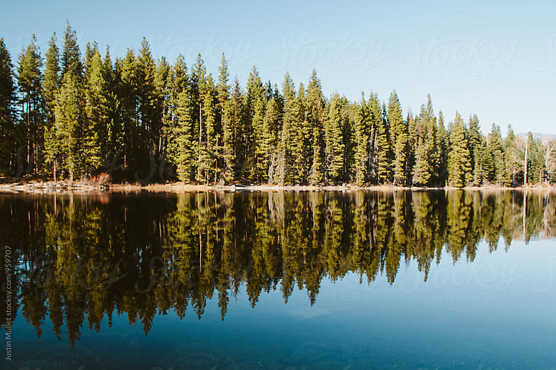 Reflections of pine trees on a still lake by Justin Mullet for Stocksy United