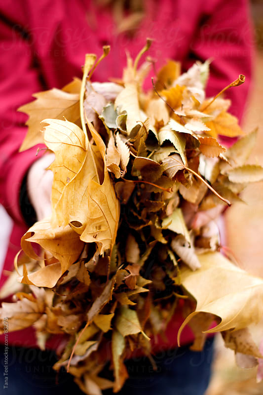 A girl holds a handful of dried fall leaves by Tana Teel for Stocksy United