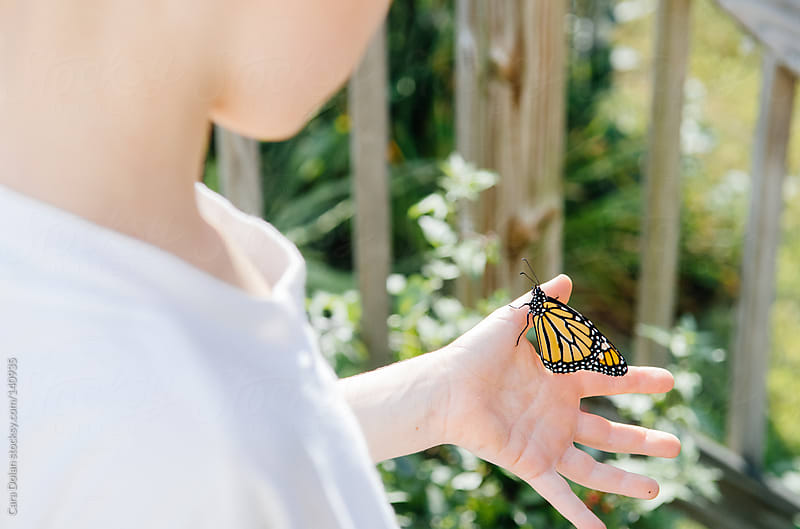 Child holds a monarch butterfly in his hand by Cara Dolan for Stocksy United