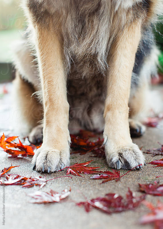 Dog Paws and Leaves by Marta Locklear for Stocksy United
