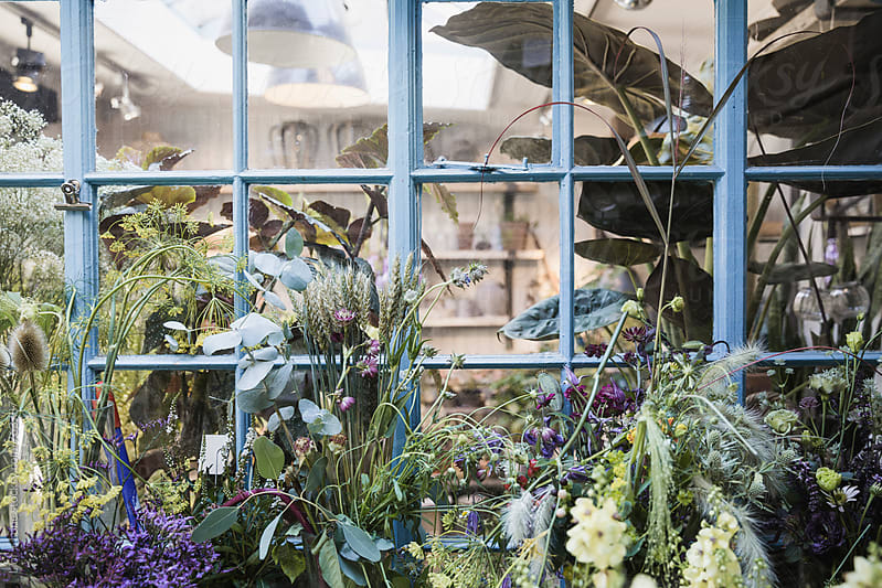 Plants by a blue window in a flower shop by Lior + Lone for Stocksy United