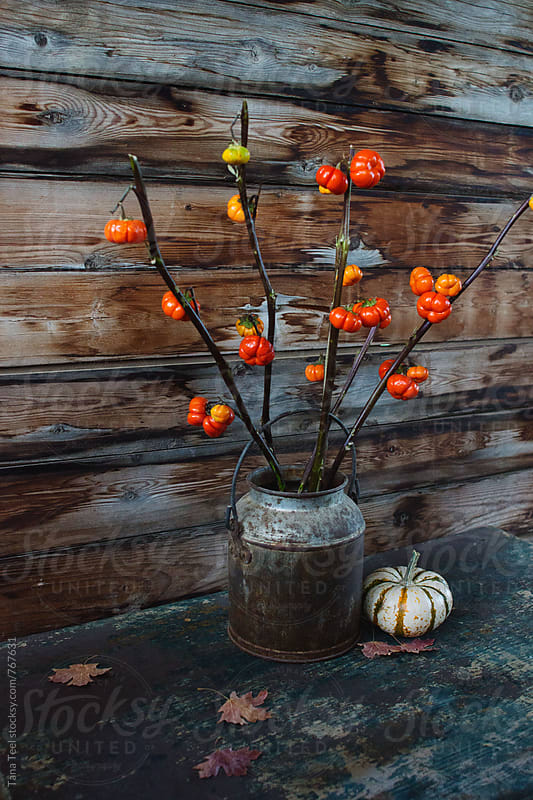 series of autumn decoration using pumpkin on a stick plant by Tana Teel for Stocksy United