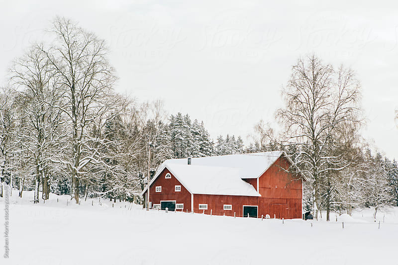 Red barn in snowy Swedish countryside by Stephen Morris for Stocksy United