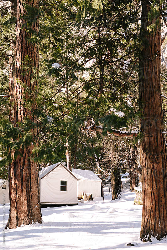 White Canvas Cabin Nestled in Trees by Simone Anne for Stocksy United