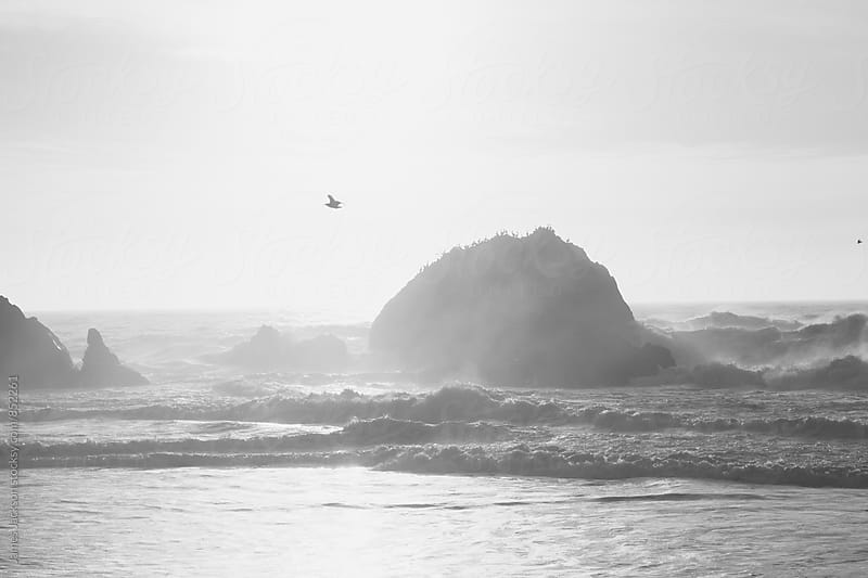Rocky ocean with seagull flying by James Jackson for Stocksy United