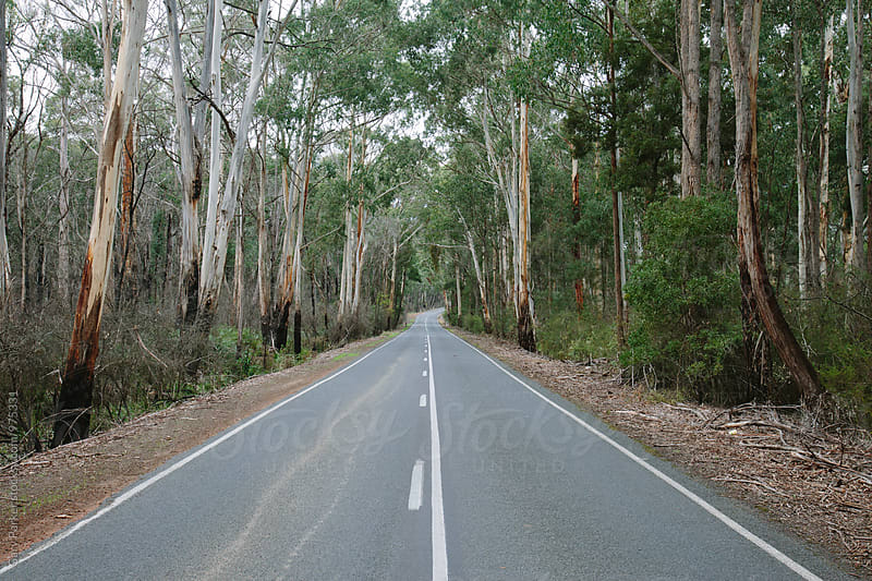 A straight road through the Australian bush by Gary Parker for Stocksy United