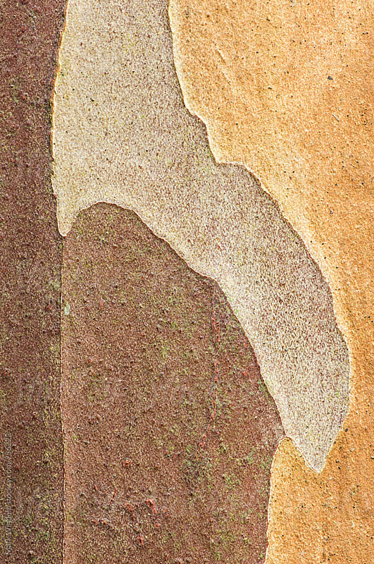 Tree bark patterns, closeup by Mark Windom for Stocksy United