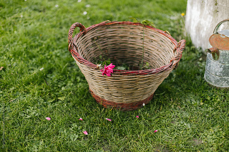 Pink flower in a wicker basket by Marija Kovac for Stocksy United