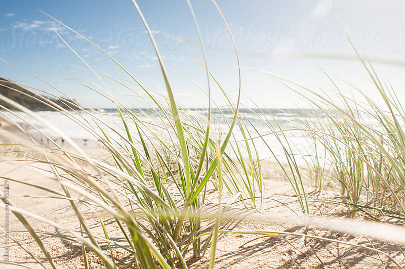 grass on sand dune at the beach, Qld Australia by Gillian Vann for Stocksy United