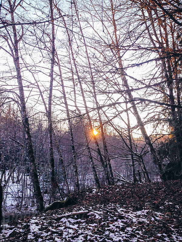 Sunset Glowing Through Trees In The Dead Of Winter  by Luke Mattson for Stocksy United