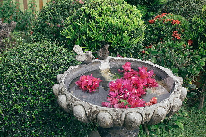 A bird pool with water and flowers by Lawrence del Mundo for Stocksy United