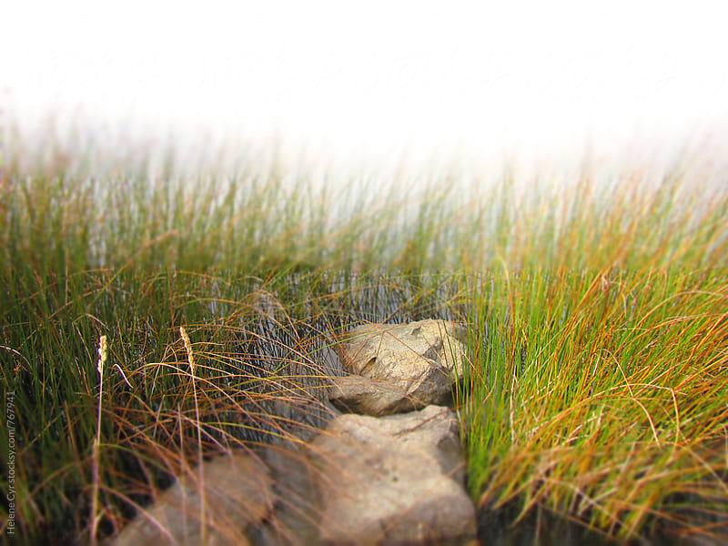 Autumn around Elk Lake by Helene Cyr for Stocksy United
