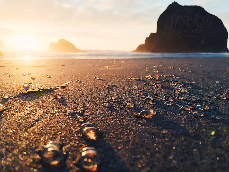 Tiny Jellyfish Strewn Across Sandy Ocean Shore At Sunset by Luke Mattson for Stocksy United