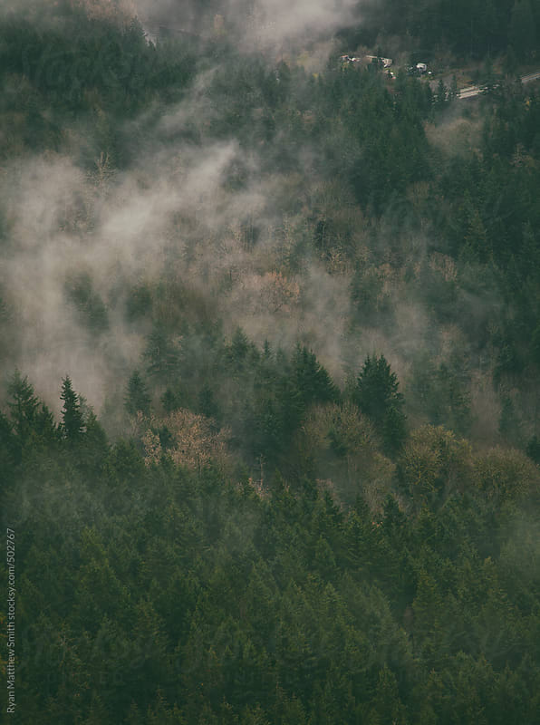 Cloudy Evergreens by Ryan Matthew Smith for Stocksy United