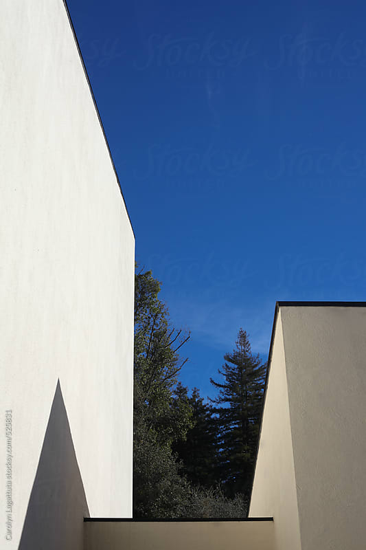 Modern architecture with a view of the trees and blue sky by Carolyn Lagattuta for Stocksy United