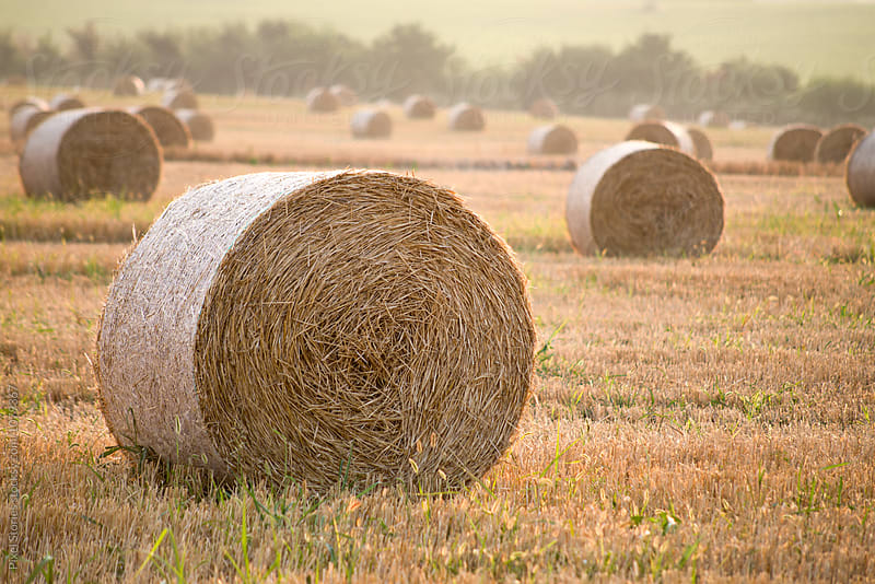 Bales of hay in field in the morning by Pixel Stories for Stocksy United