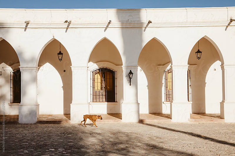 A dog walking near a colonial-style building. by michela ravasio for Stocksy United
