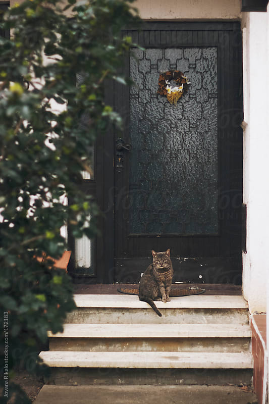 Cat sitting in front of the door by Jovana Rikalo for Stocksy United