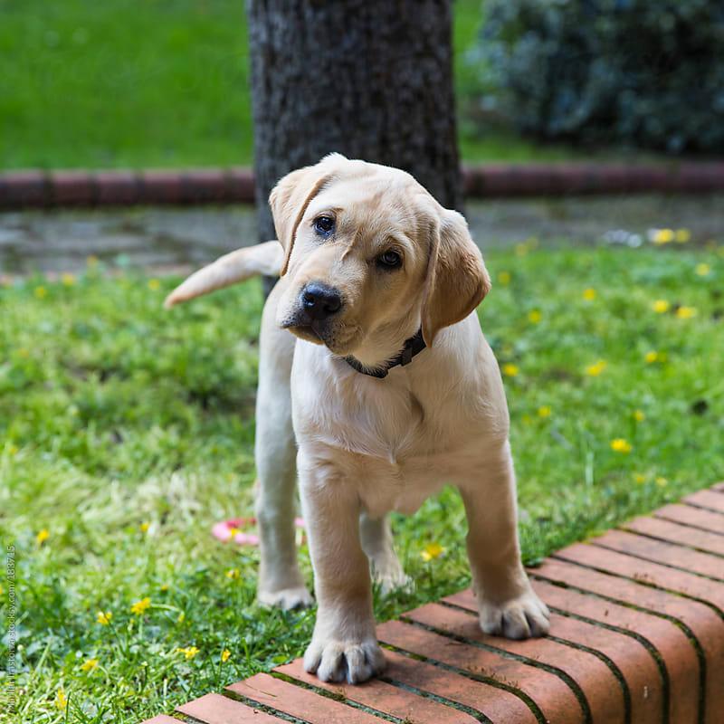 Puppy by Marilar Irastorza for Stocksy United