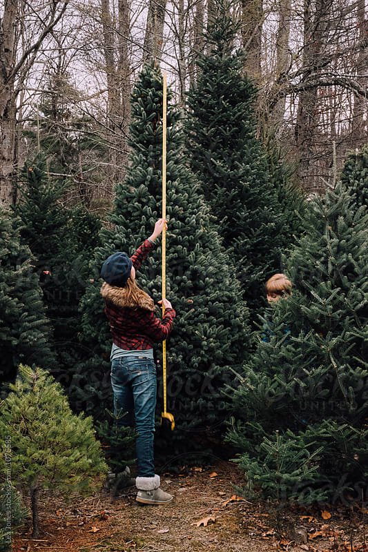 teen measuring Christmas tree by Léa Jones for Stocksy United
