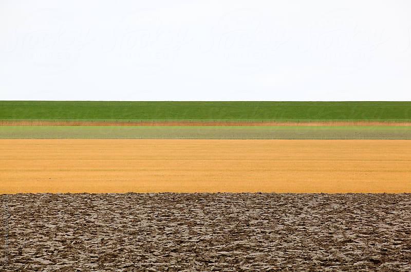 Dutch farmland and dike in winter by Marcel for Stocksy United