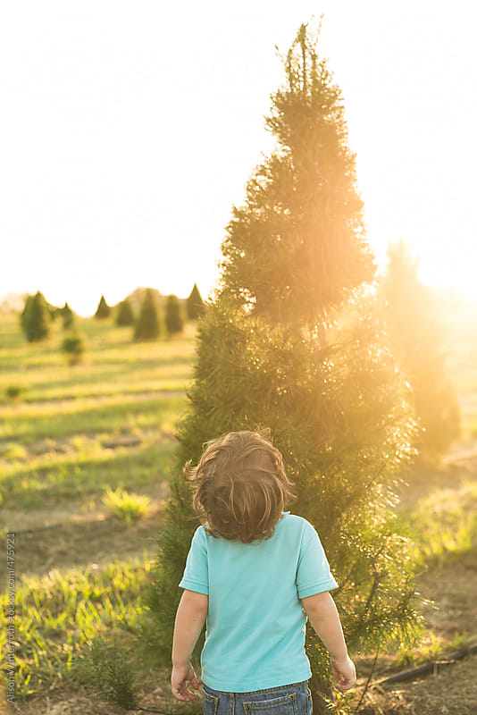 A Little Boy Looks Up At His Christmas Tree At A Tree Farm by Alison Winterroth for Stocksy United