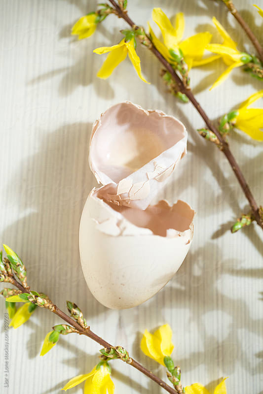 broken egg shell on wooden floor with yellow flowers by Lior + Lone for Stocksy United