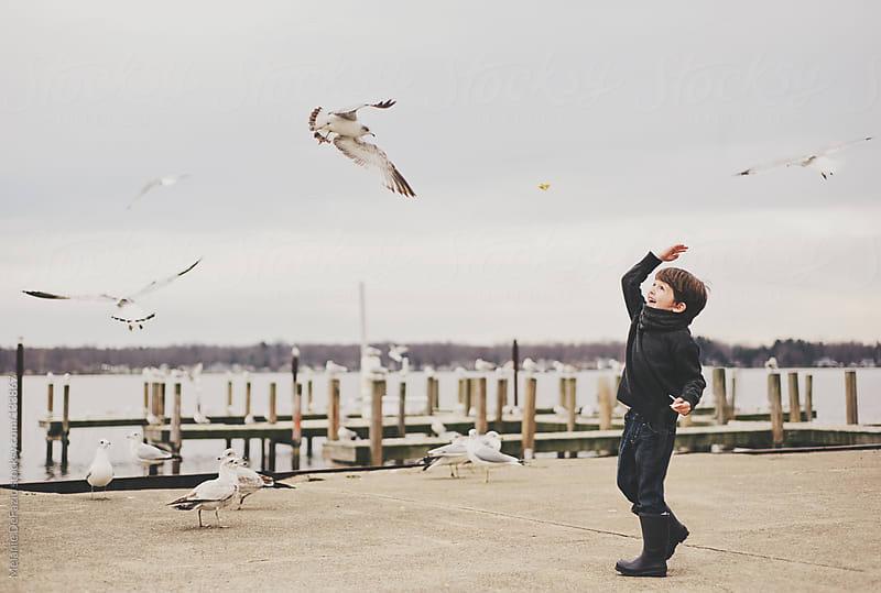 Feeding the gulls by Melanie DeFazio for Stocksy United