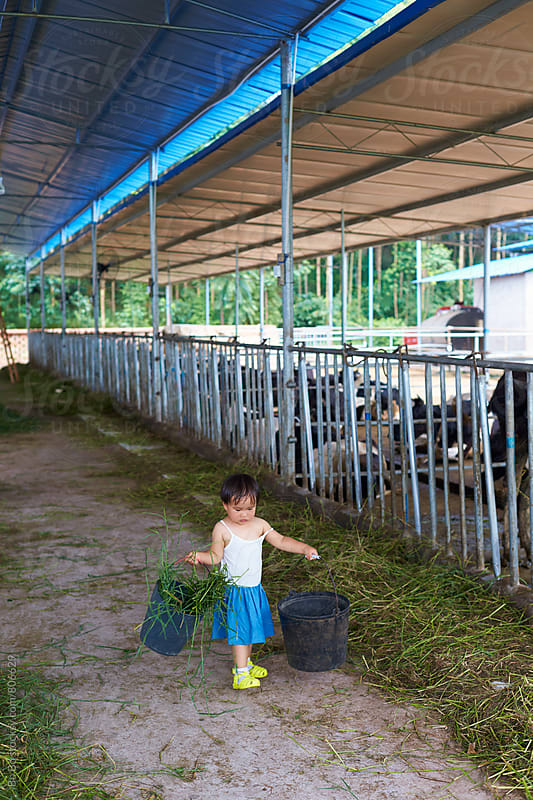 one little asian girl working in the dairy farm by cuiyan Liu for Stocksy United