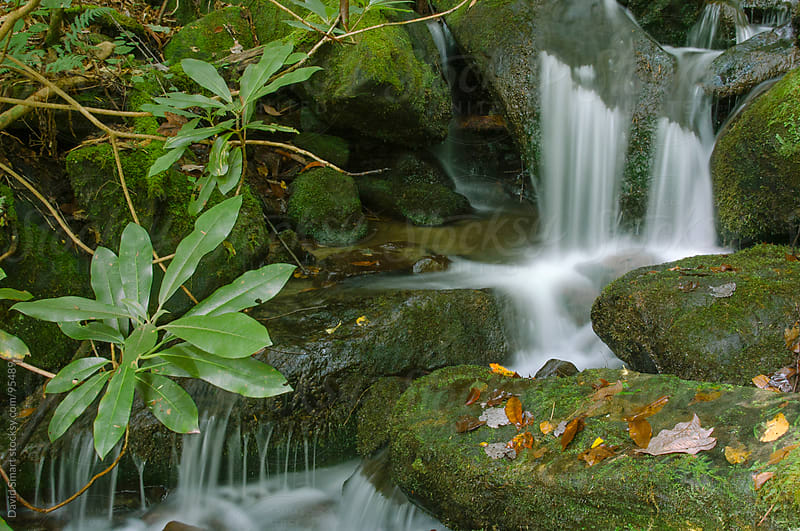 Small cascade with rhododendron leaves in foreground by David Smart for Stocksy United