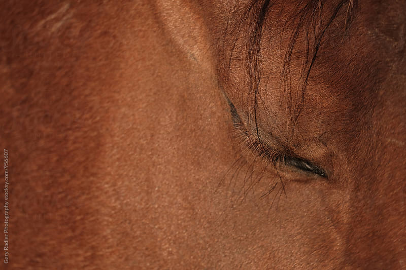 Closed Eye of a Chestnut Horse by Gary Radler Photography for Stocksy United